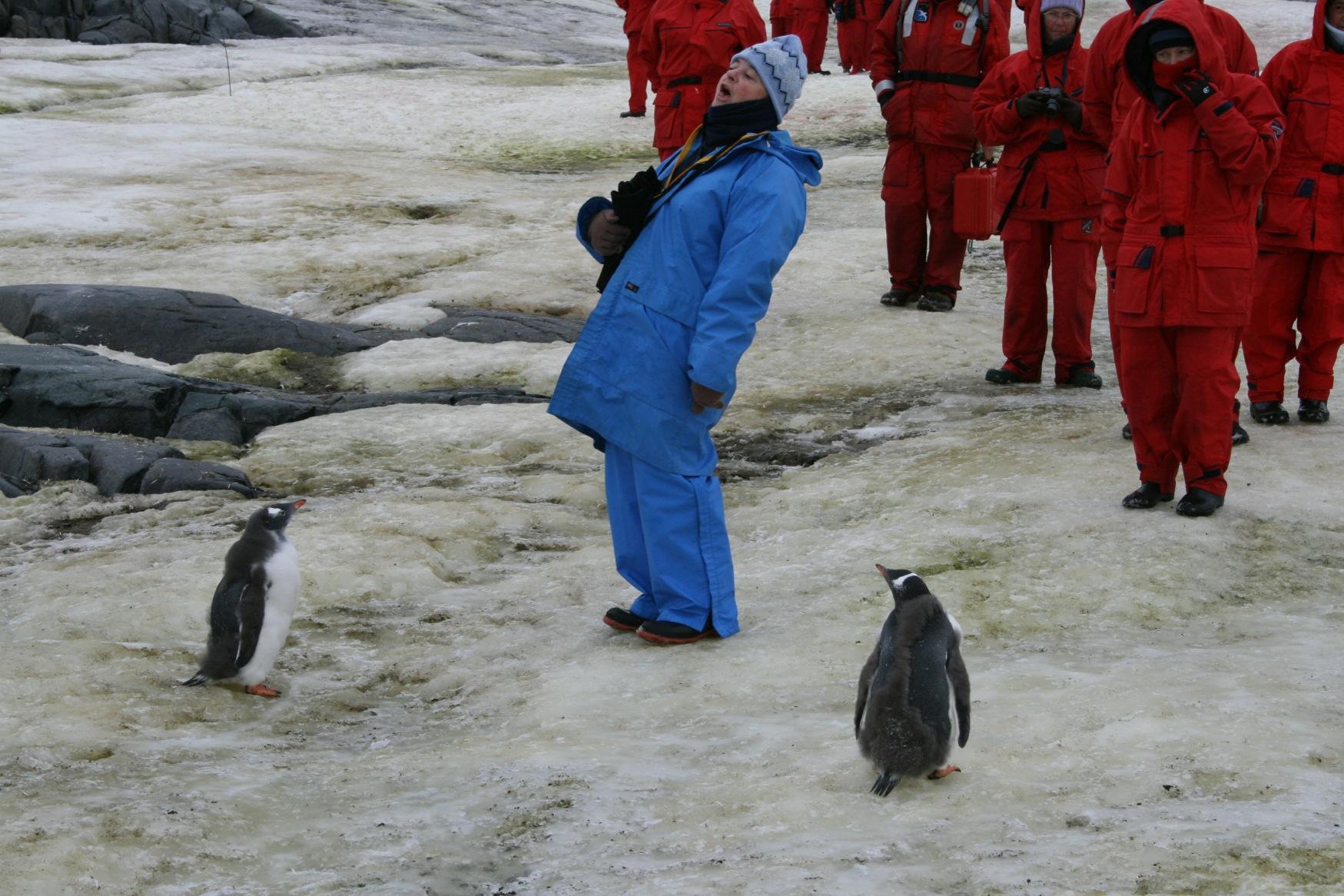 Antarctic 2009 Penguin Pynt.JPG