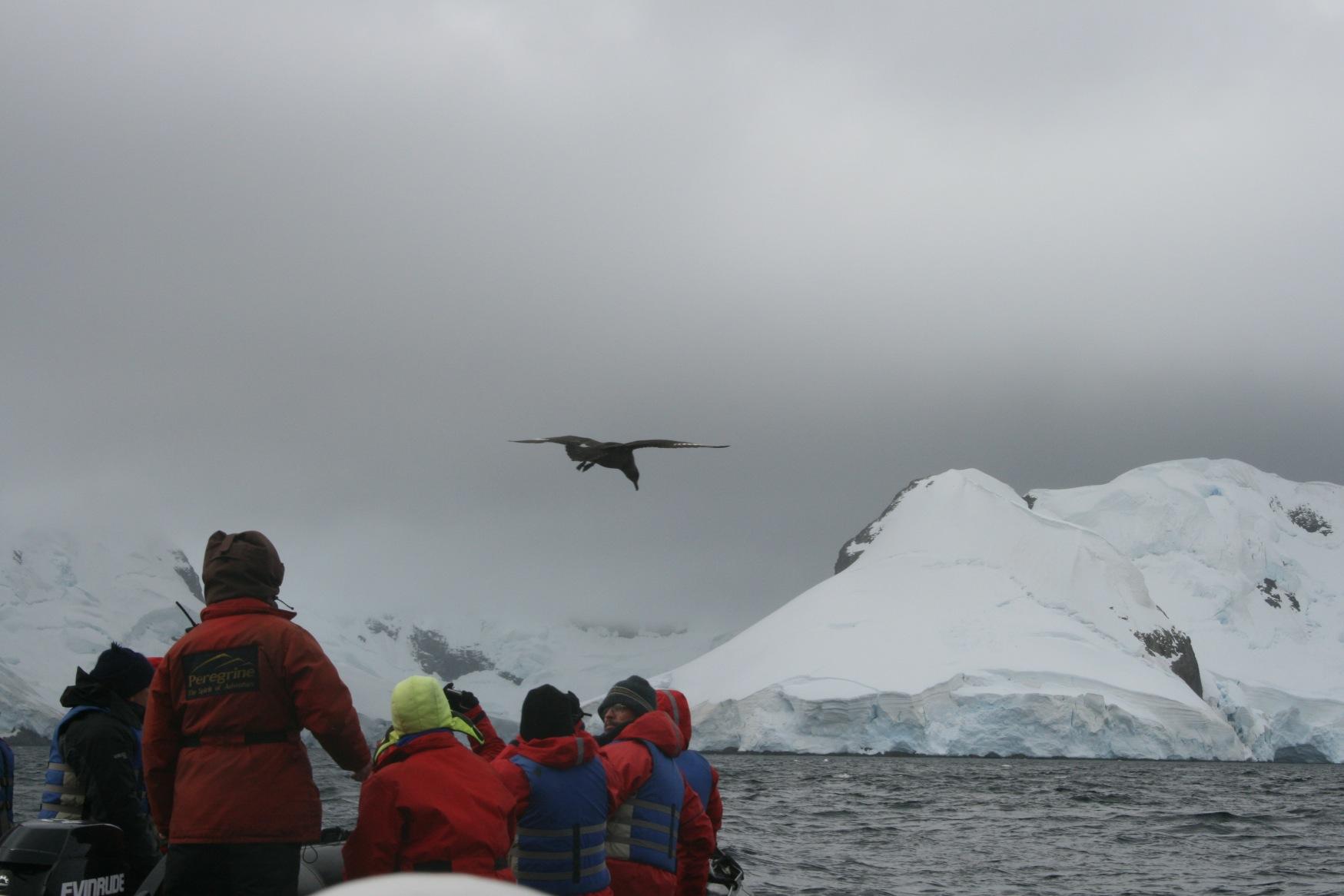 Antarctic zodiacing.JPG