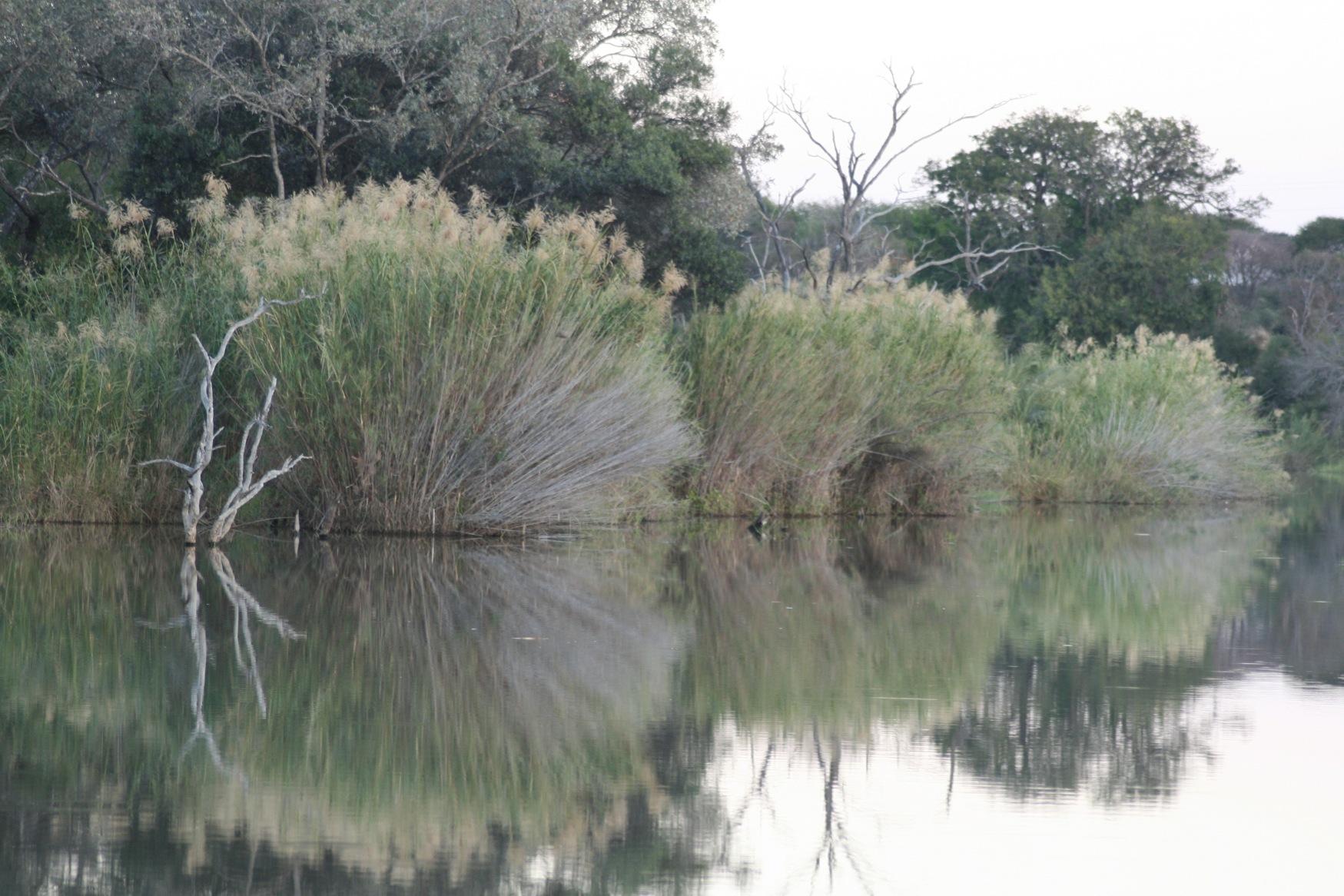 Sth Africa waterhole.jpg
