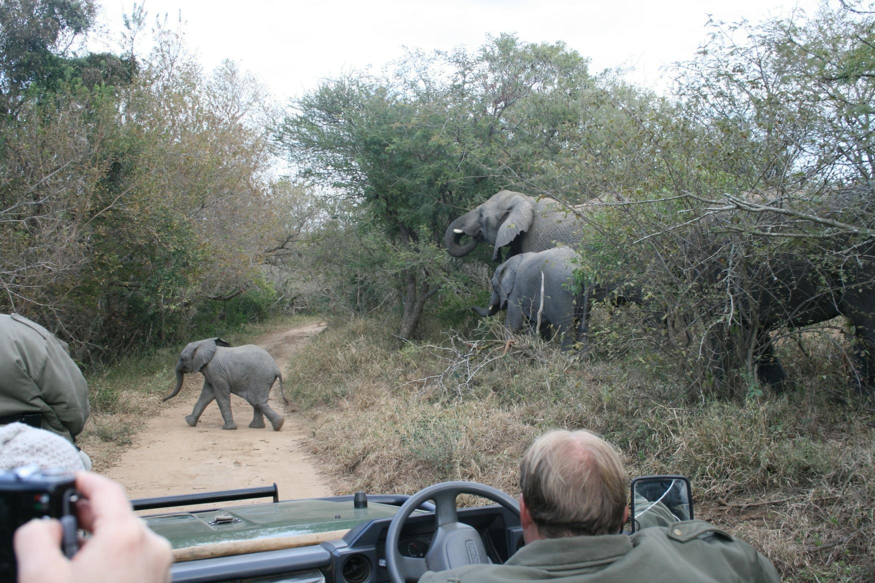 Sth Africa ele crossing.jpg