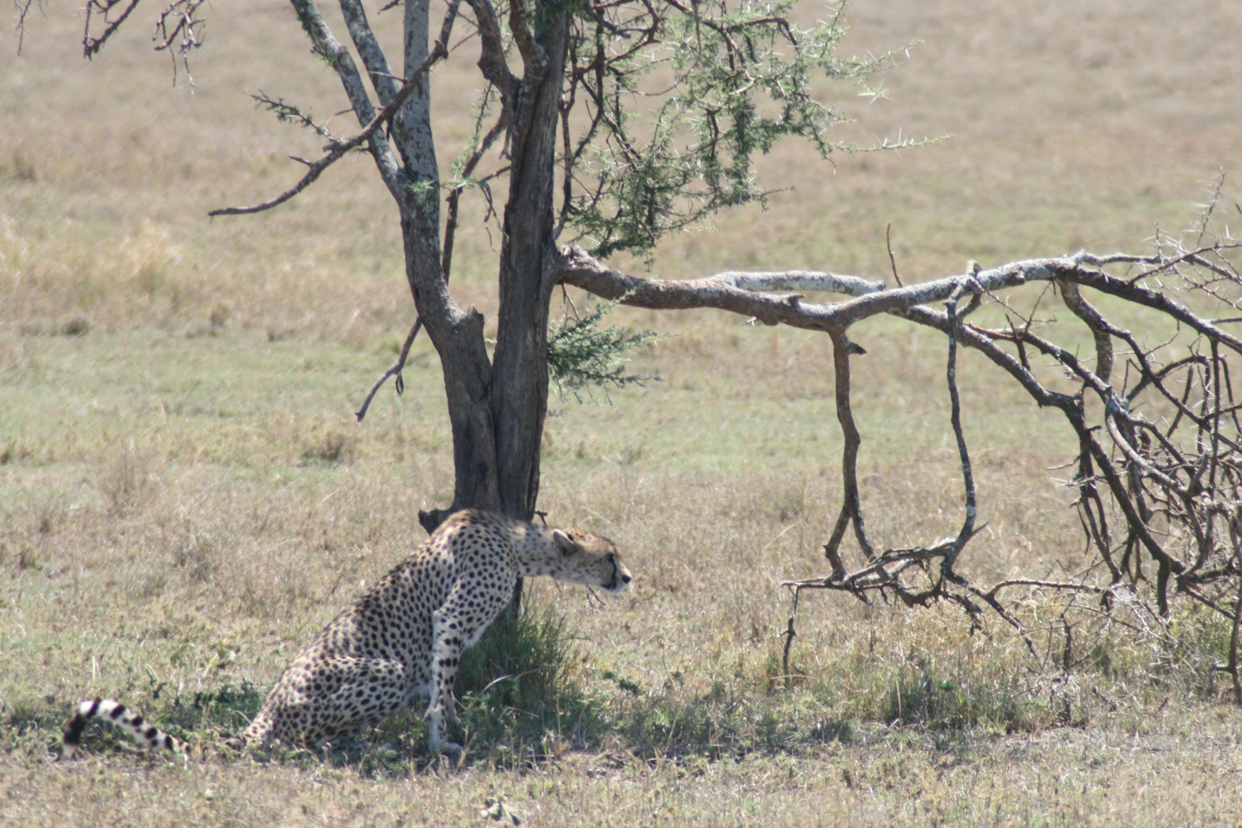 Serengeti .jpg