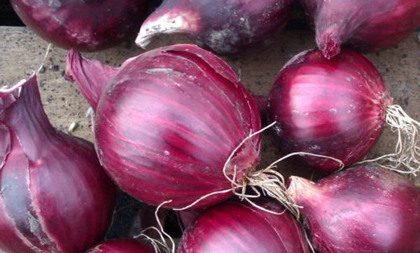Red Onion ,Small, Each