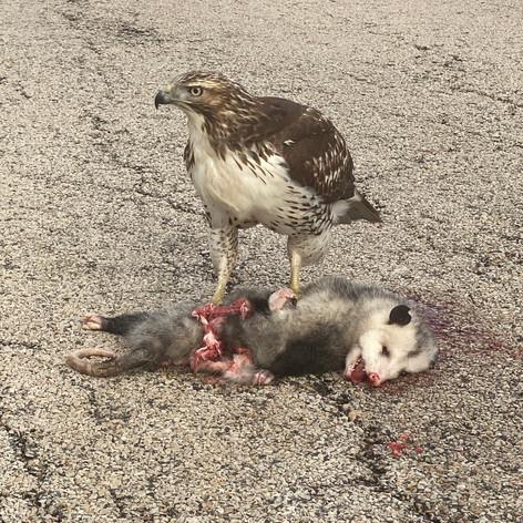 Road Kill 2.0