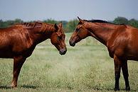 Horse boarding near me, stall boarding, pasture boarding, full care boarding near me, stables, dfw, Justin TX, Roanoke TX, Haslet TX, Keller TX, Southlake TX, Argyle  TX