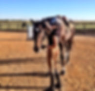 Starline Stables, Clearnspan riding arena, indoor arena, dressage arena, outdoor arena, dfw, texas, riding lessons, horse shows, pasture boarding, stall boarding, horse boarding, Justin TX