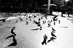 alai.art_Birds