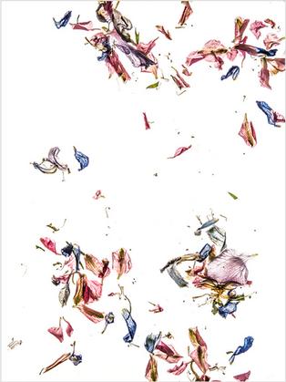 Dale Grant - Delphinium Petals Series 02