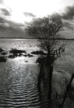 Gerhard_Kromschroeder_Die_Überschwemmung(Brual)