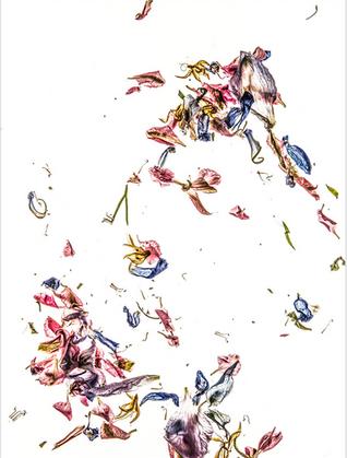 Dale Grant - Delphinium Petals Series 03
