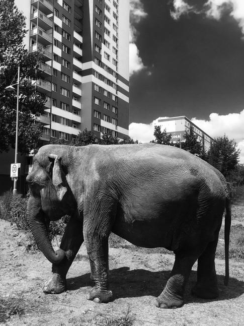 Chris Schmid - Elefant in Berlin