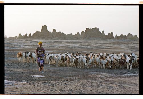 Analog_Tobias Ulbrich_En Route_Djibouti_Lake-Abbe_Girl & Goats
