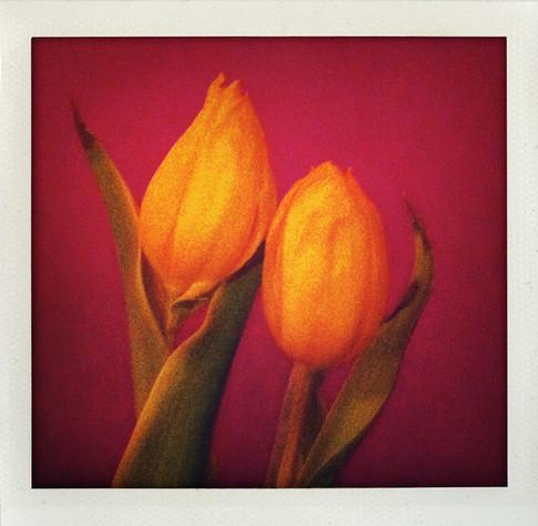 Chris Schmid - Tulpenpaar