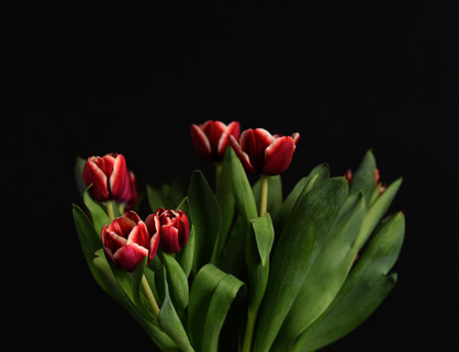 Chris Schmid - Tulip