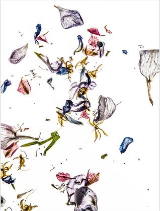 Dale Grant - Delphinium Petals Series 01