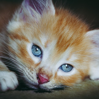 Gatti!