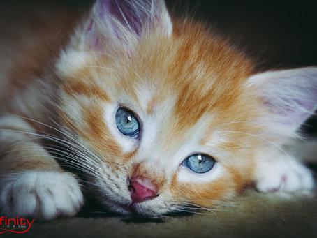Fotografare ad altezza gatto