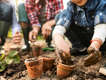 Cultivating Calmness: The Benefits of Gardening