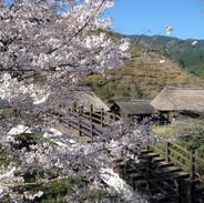 桜と作小屋