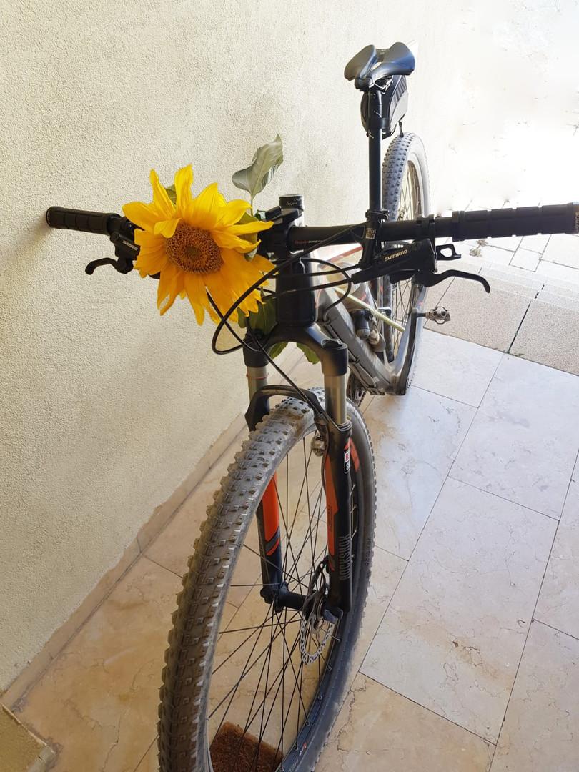 אופניים.jpg