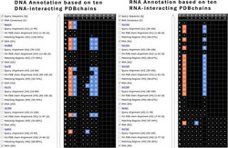 RNA Annotation