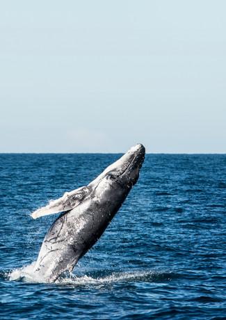 WhaleWatching2607-19.jpg
