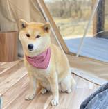 ドームテント (犬).jpg