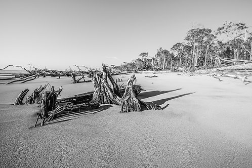 "Hunting Island Beach In Black & White - 24""x36"" Canvas"