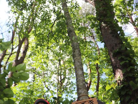 薬莱山に木札が増えました。