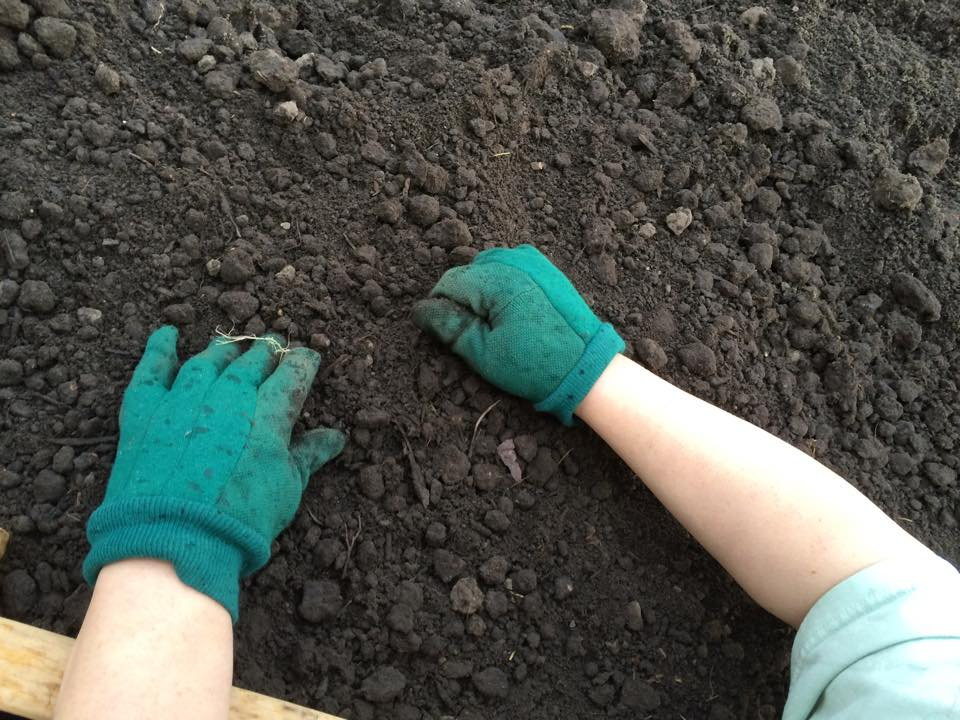 Busting dirt clumps