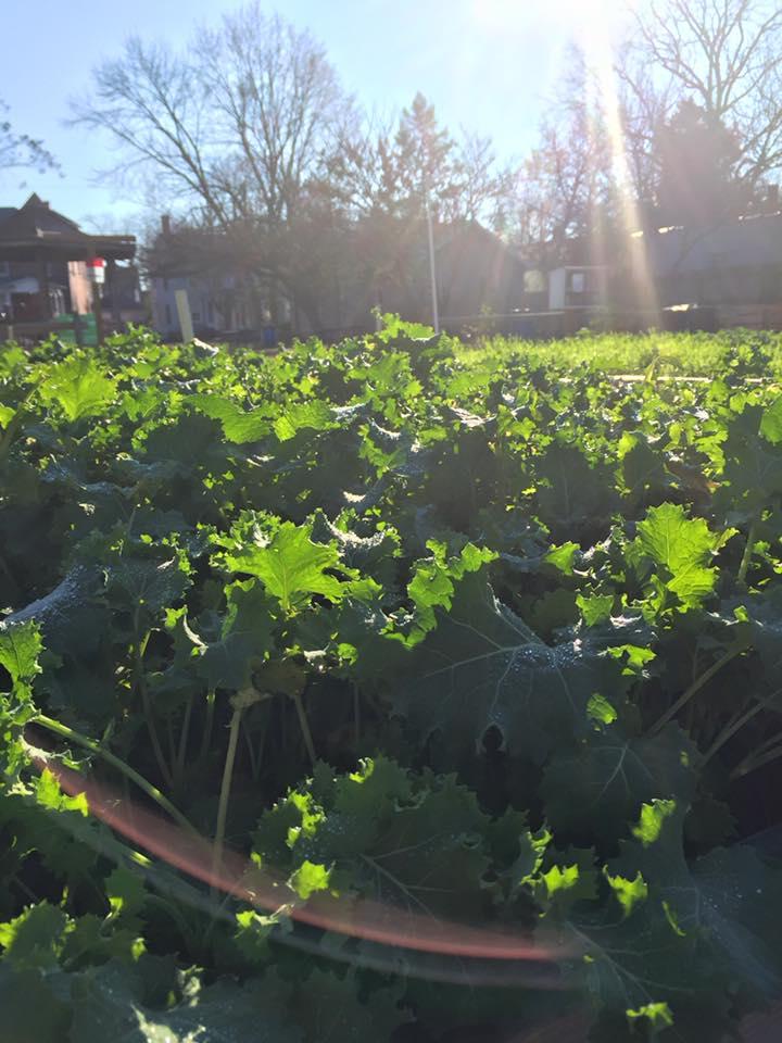 Camden Community Garden Jan 2