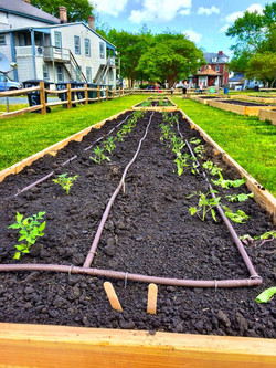 Drip irrigation in place