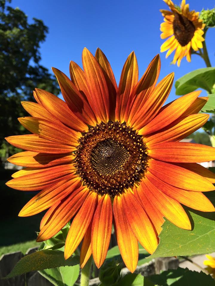 Garden Beauty Aug 23 2016