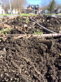 Beautiful soil.jpg