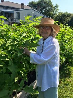 Mary Picking Eggplant