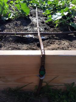 Drip irrigation working great