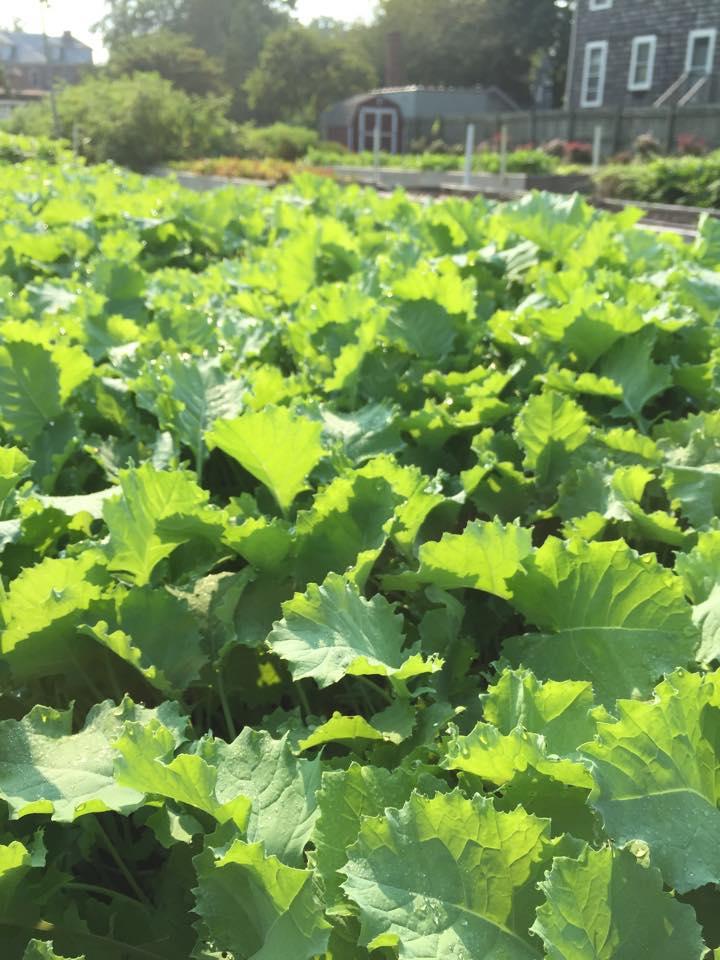 Kale ready to eat