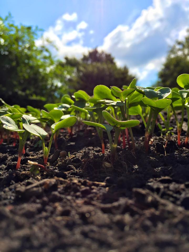 September 18, 2015 Sprouts