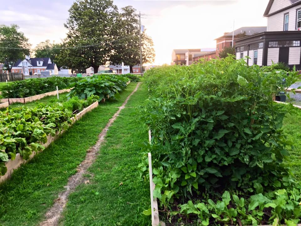 Community Garden June 18, 2015.jpg