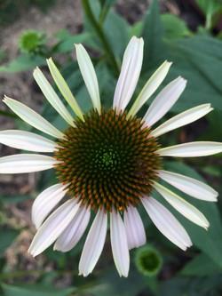 Garden Beauty Sept 4.jpg