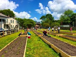 Community planting together