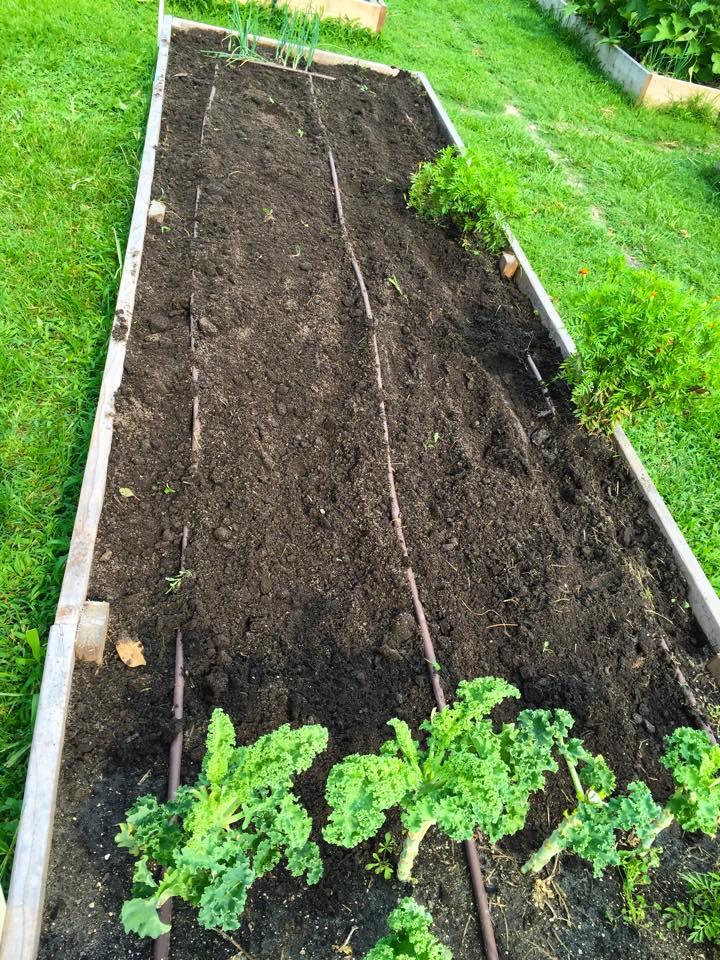 Planted squash & zucchini