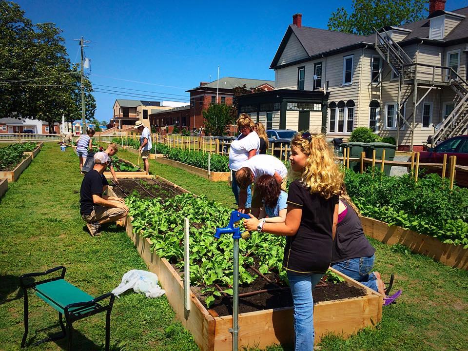 Neighborhood gardeners