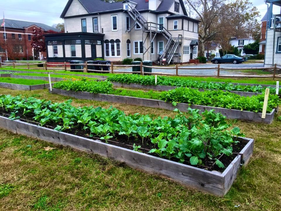 Nov 9 garden 2.jpg