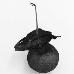 Elle Ford carbonised object