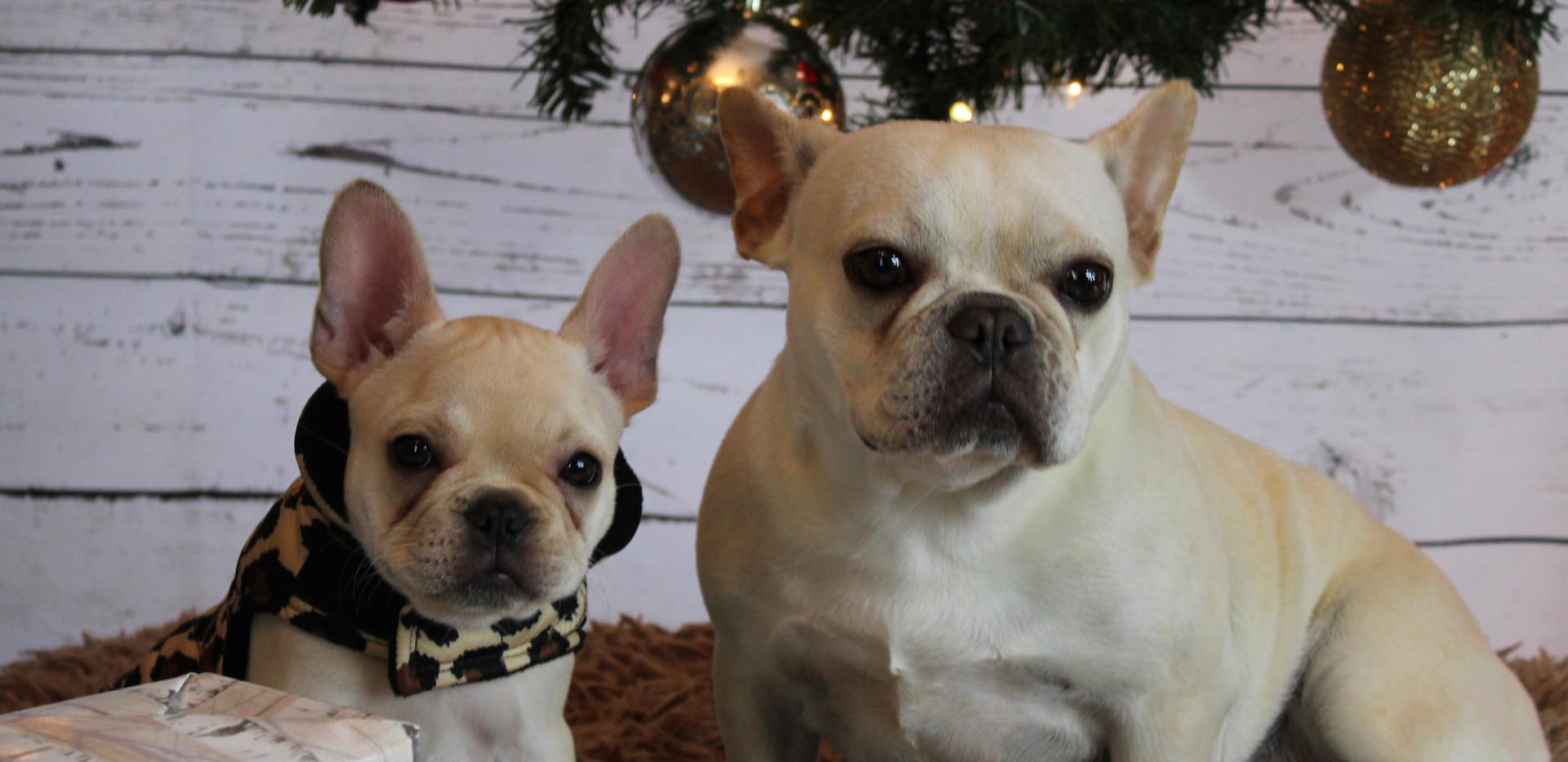 Chloe & Poppy.JPG