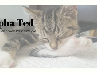 Alpha Ted, Official Chamber Office Cat