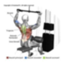 mappa-muscolare-esercizi-evolutionfit.jp