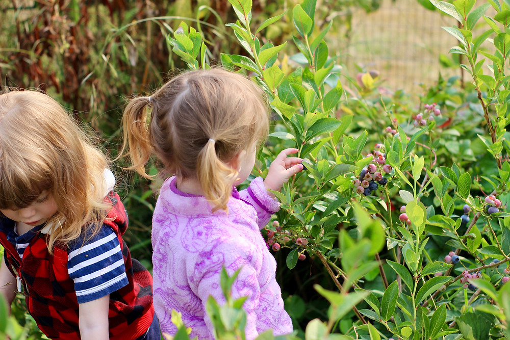 toddler twins in the garden
