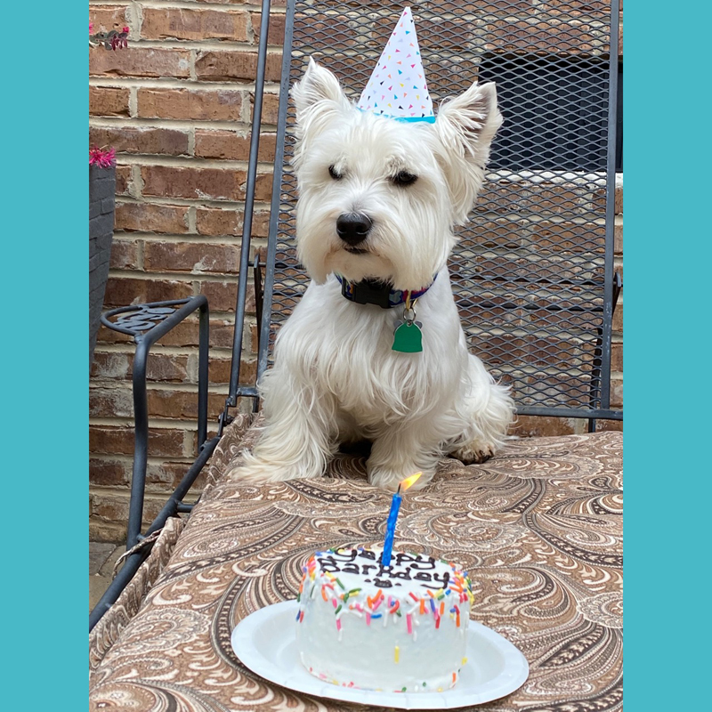 It's your birthday, Bentley!