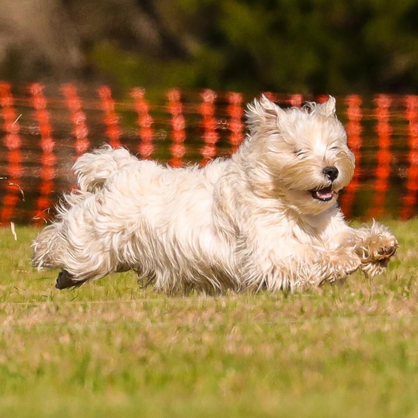Tradd takes flight!